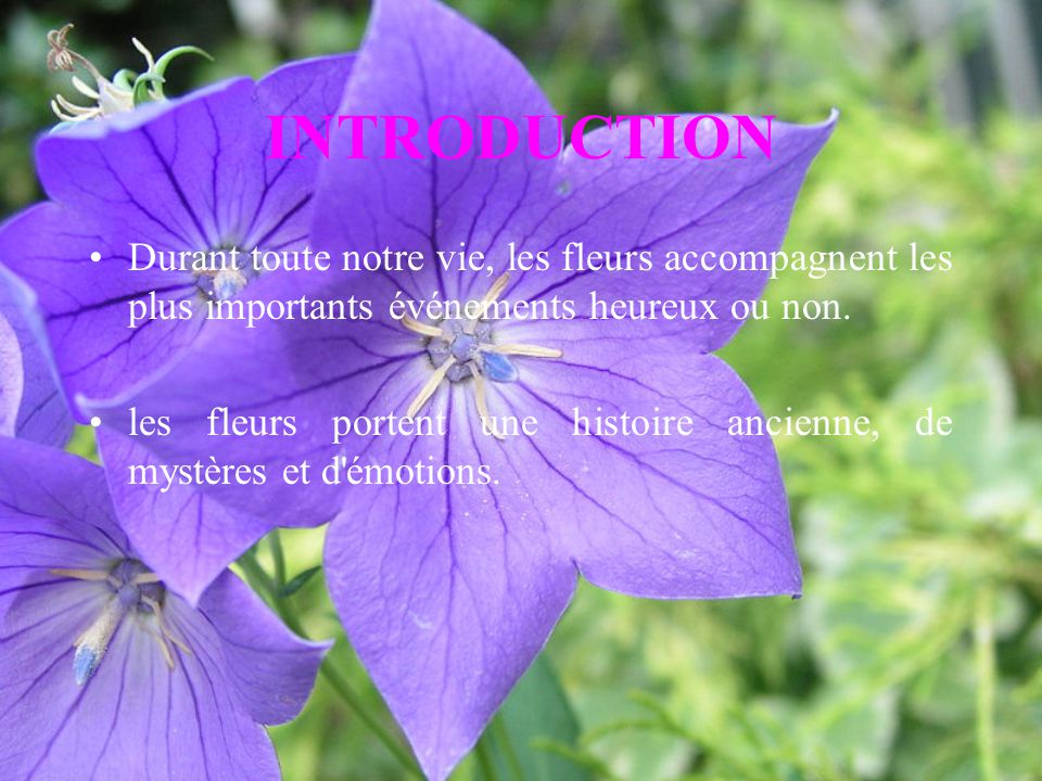 INTRODUCTION Durant toute notre vie, les fleurs accompagnent les plus importants événements heureux ou non. les fleurs portent une histoire ancienne,