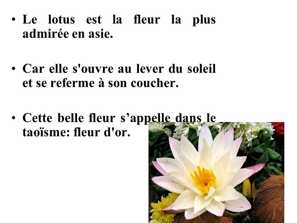 Le lotus est la fleur la plus admirée en asie. Car elle s'ouvre au lever du soleil et se referme à son coucher. Cette belle fleur s'appelle dans le ta