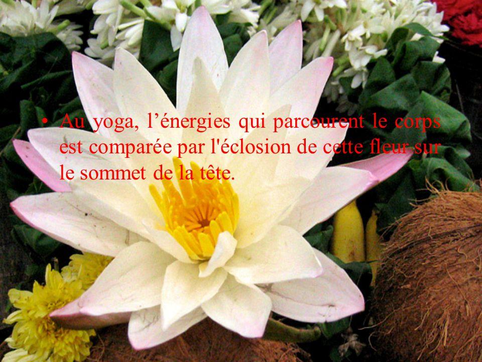 De manière générale, c est une fleur associée a l'infini, à la pureté et aux qualités de l homme.