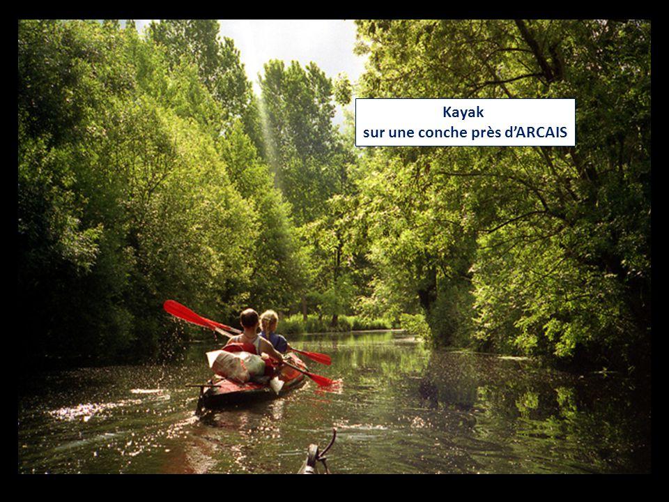 Kayak sur une conche près d'ARCAIS