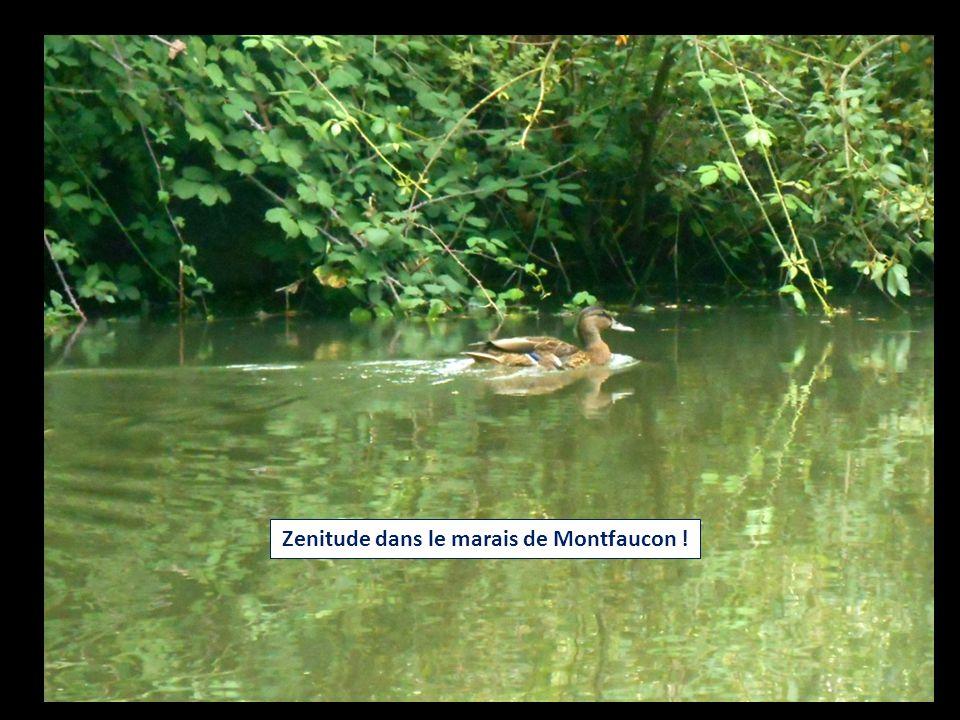 Zenitude dans le marais de Montfaucon !