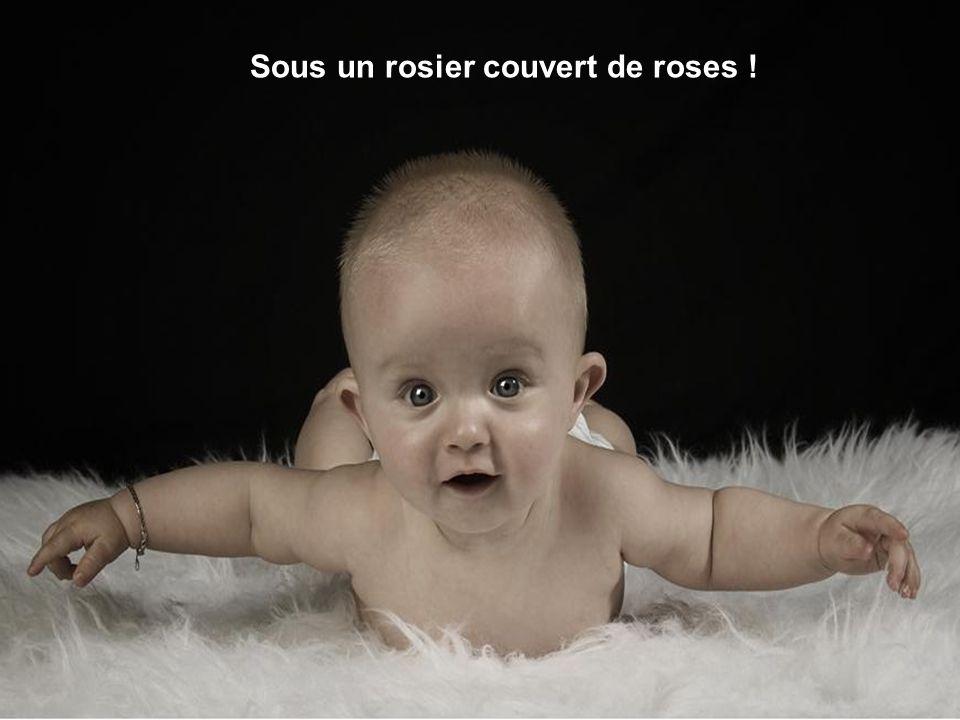 Sous un rosier couvert de roses !