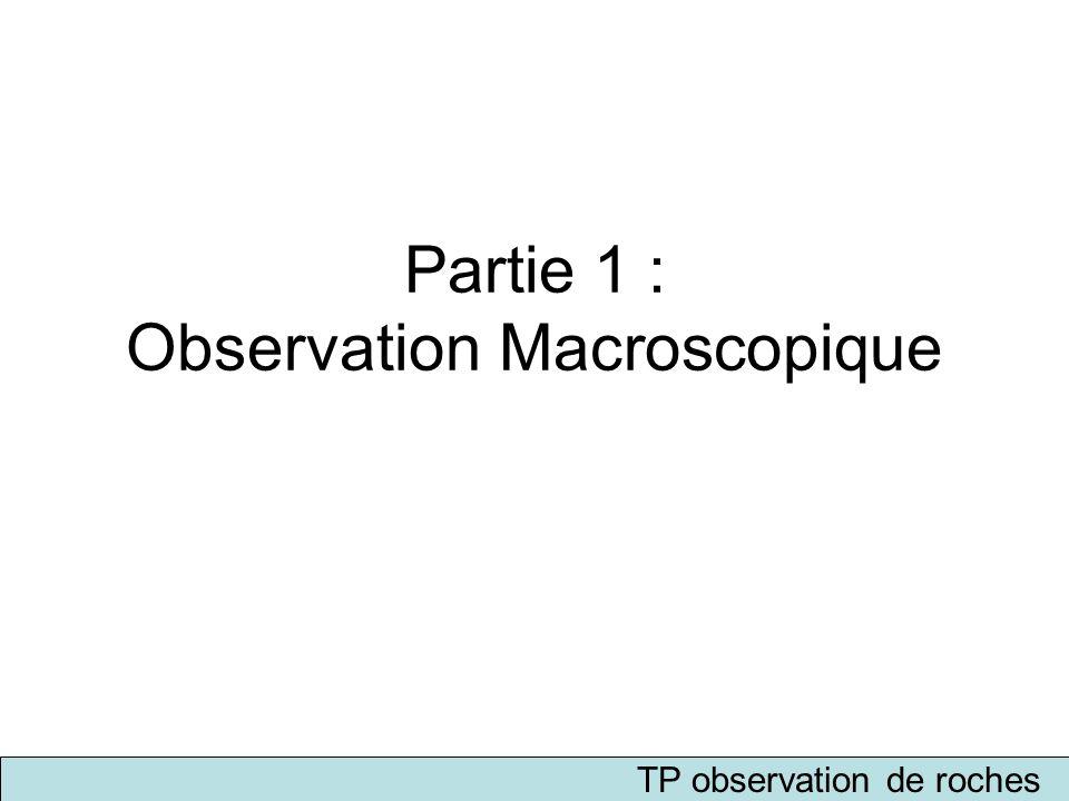 Partie 1 : Observation Macroscopique TP observation de roches