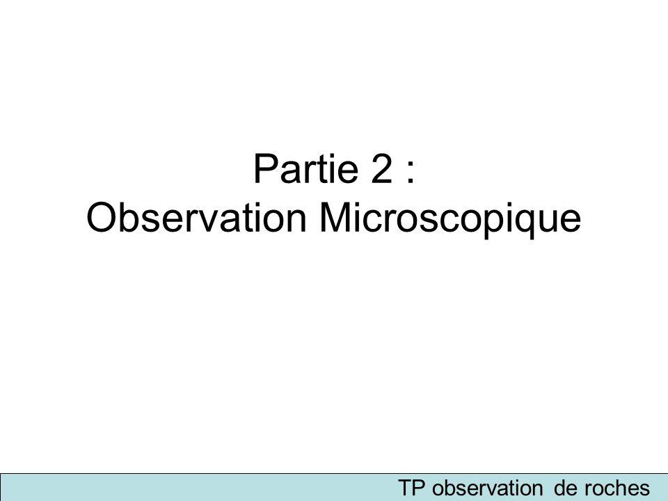 Partie 2 : Observation Microscopique