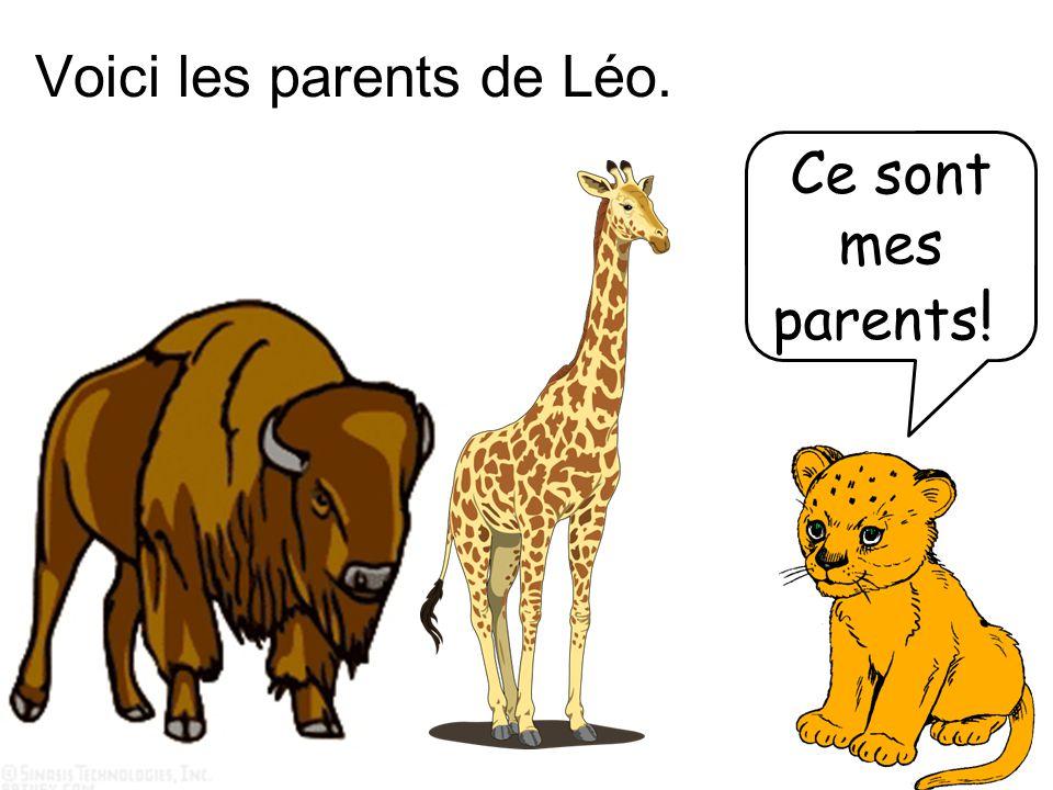 Voici les parents de Léo. Ce sont mes parents !!