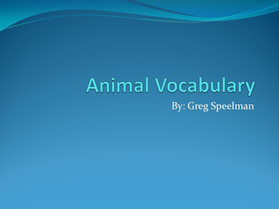 Animal Vocabulary Un poisson- fish Une vache- cow Un lapin- rabbit Une poule- chicken Un cochon- pig Un canard- duck Un cheval- horse Un écureuil- squirrel Un oiseau- bird