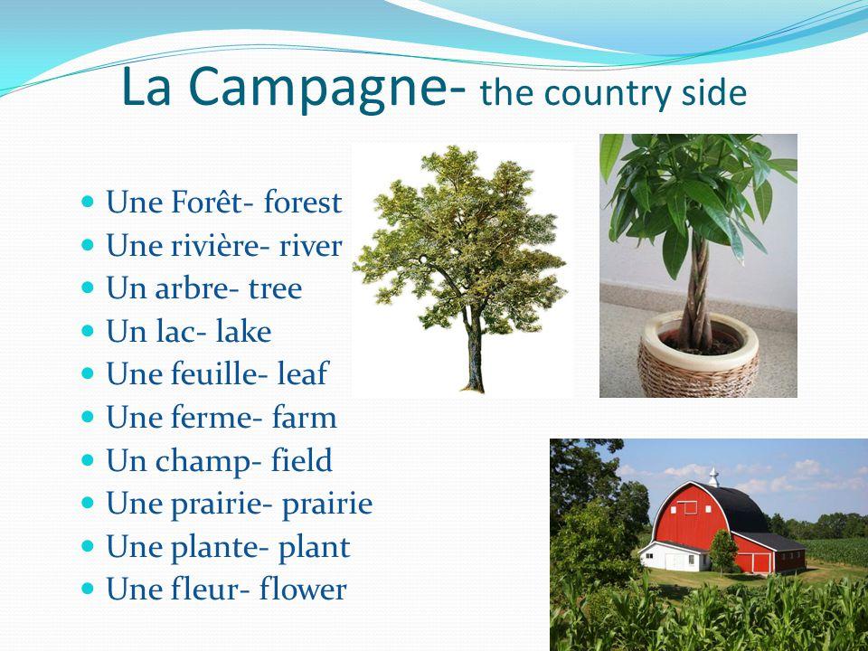 La Campagne- the country side Une Forêt- forest Une rivière- river Un arbre- tree Un lac- lake Une feuille- leaf Une ferme- farm Un champ- field Une p