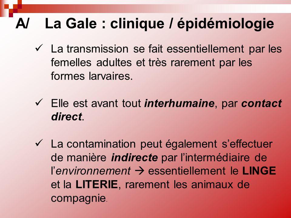 A/La Gale : clinique / épidémiologie La transmission se fait essentiellement par les femelles adultes et très rarement par les formes larvaires. Elle