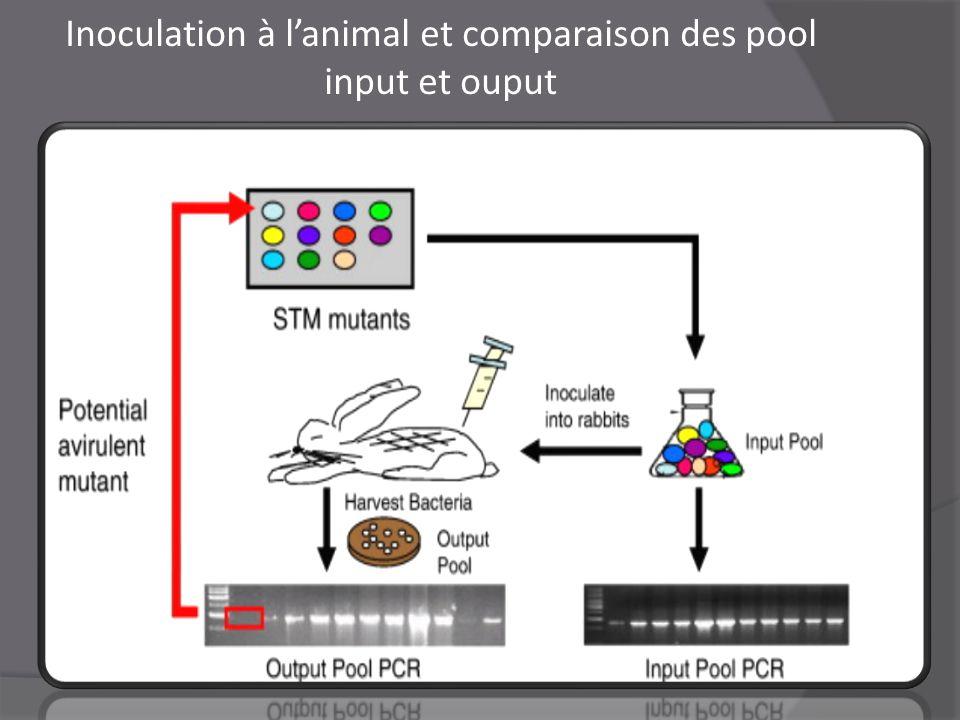 Inoculation à l'animal et comparaison des pool input et ouput