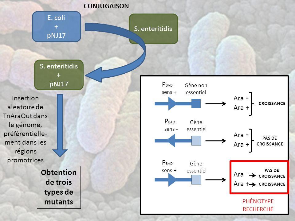 E.coli + pNJ17 S.
