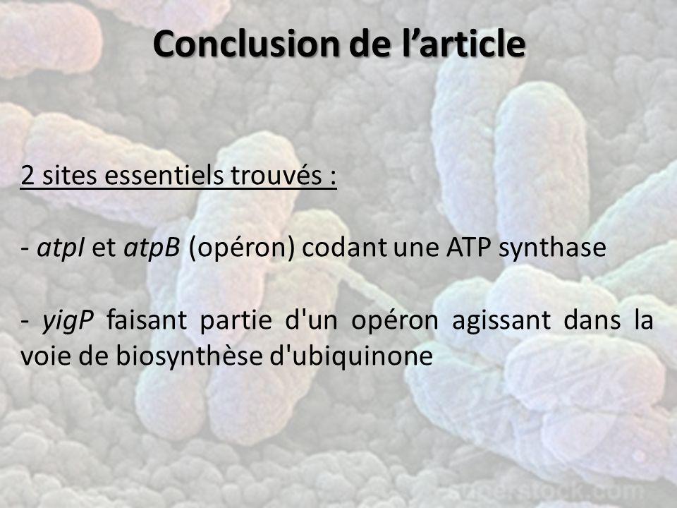 Conclusionde l'article Conclusion de l'article 2 sites essentiels trouvés : - atpI et atpB (opéron) codant une ATP synthase - yigP faisant partie d un opéron agissant dans la voie de biosynthèse d ubiquinone