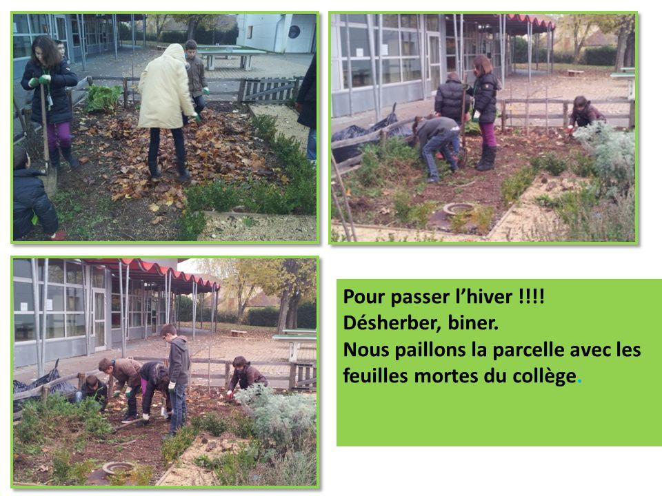 Il faut préparer le sol pour semer nos prochains légumes et nos semis de fleurs.