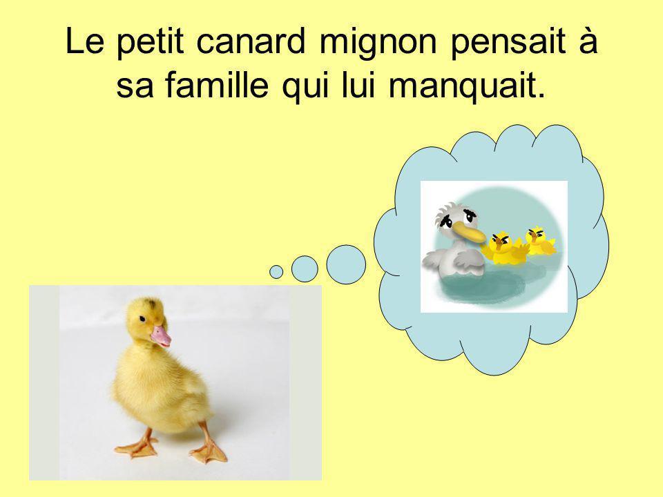Le petit canard mignon pensait à sa famille qui lui manquait.