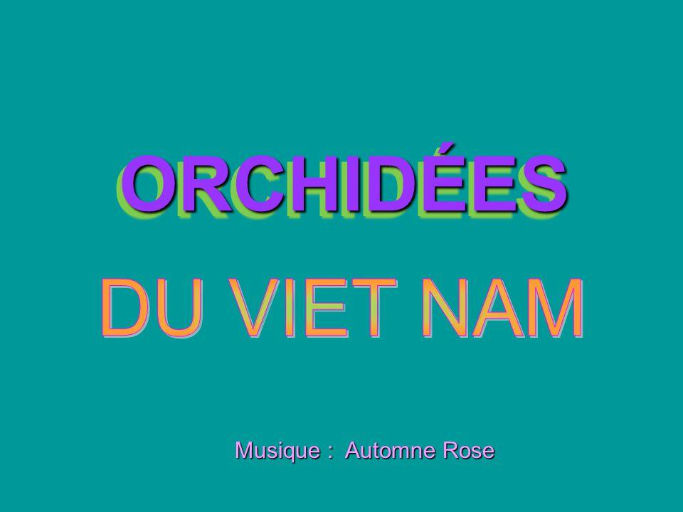 ORCHIDÉES ORCHIDÉES Musique : Automne Rose