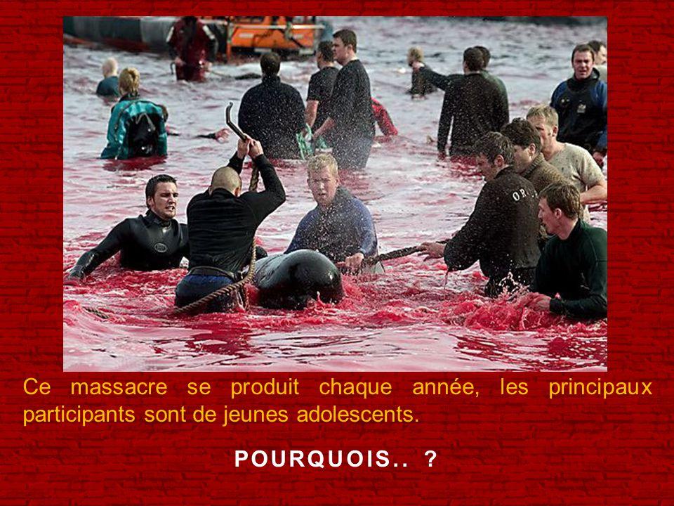 Ce massacre se produit chaque année, les principaux participants sont de jeunes adolescents.