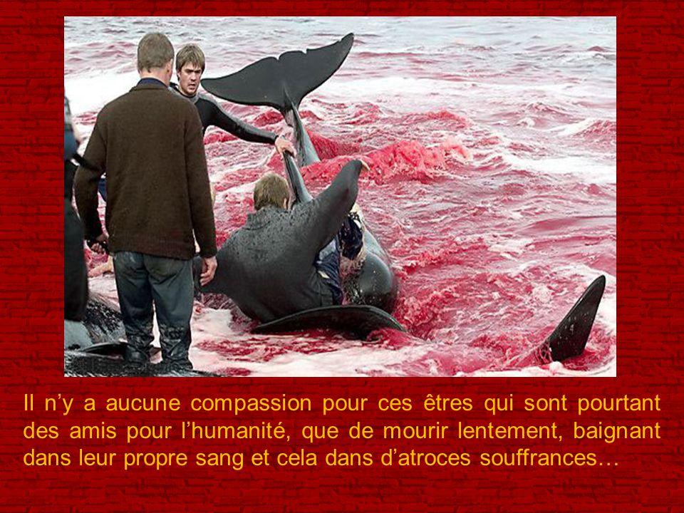 Il n'y a aucune compassion pour ces êtres qui sont pourtant des amis pour l'humanité, que de mourir lentement, baignant dans leur propre sang et cela dans d'atroces souffrances…
