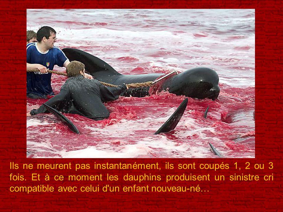 On pense qu'il est nécessaire de mentionner que le dauphin calderon, comme toutes les autres espèces de dauphins, sont en voie d'extinction..