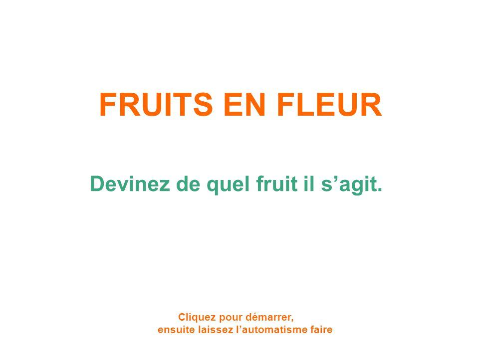 FRUITS EN FLEUR Devinez de quel fruit il s'agit.