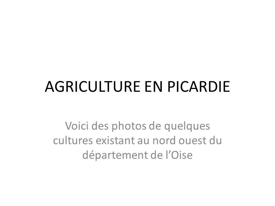 AGRICULTURE EN PICARDIE Voici des photos de quelques cultures existant au nord ouest du département de l'Oise