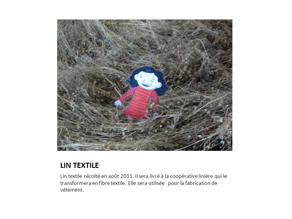 LIN TEXTILE Lin textile récolté en août 2011. Il sera livré à la coopérative linière qui le transformera en fibre textile. Elle sera utilisée pour la