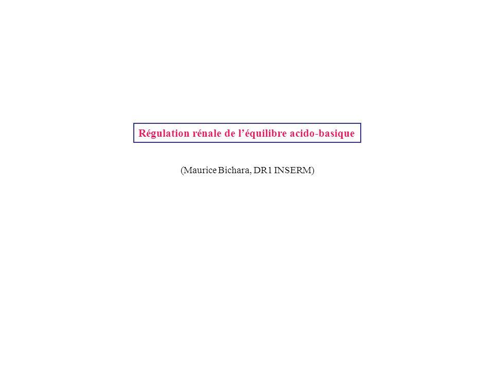 Régulation rénale de l'équilibre acido-basique (Maurice Bichara, DR1 INSERM)