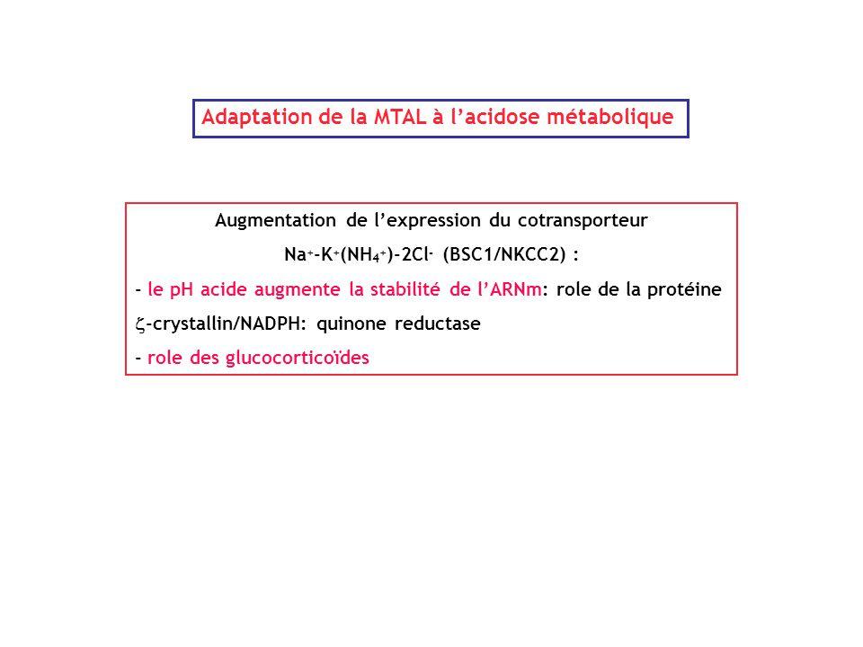 Adaptation de la MTAL à l'acidose métabolique Augmentation de l'expression du cotransporteur Na + -K + (NH 4 + )-2Cl - (BSC1/NKCC2) : - le pH acide au