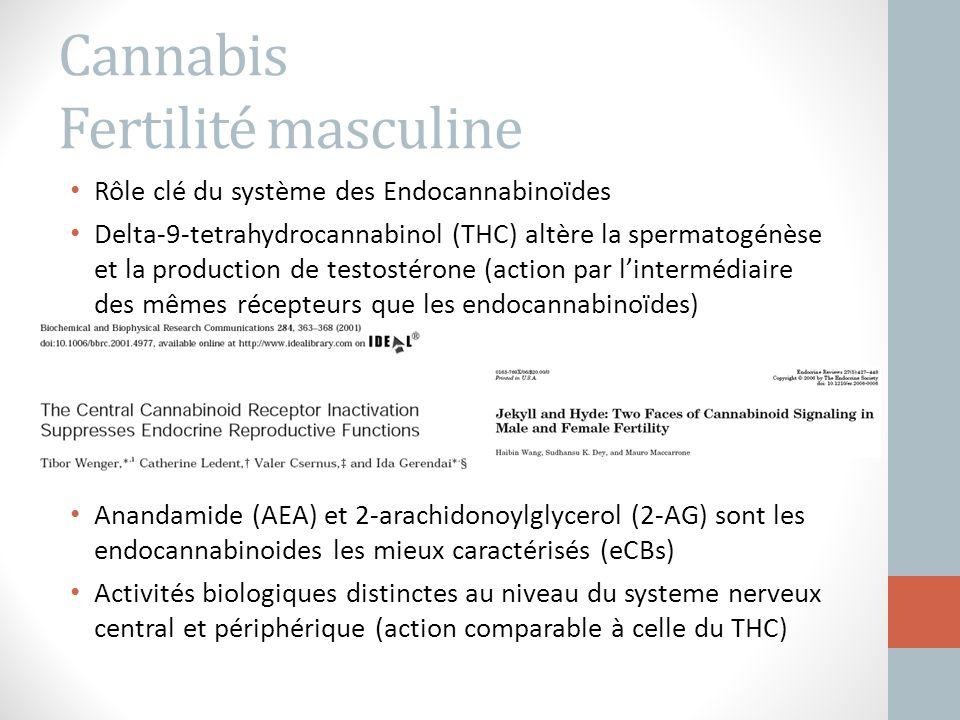 Cannabis Fertilité masculine Rôle clé du système des Endocannabinoïdes Delta-9-tetrahydrocannabinol (THC) altère la spermatogénèse et la production de