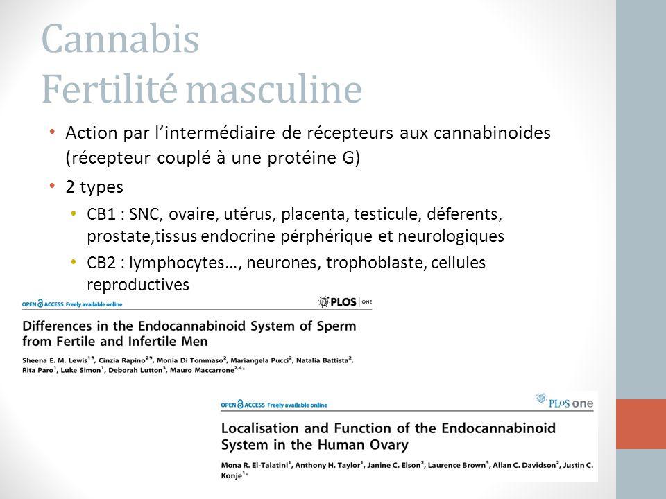 Cannabis Fertilité masculine Action par l'intermédiaire de récepteurs aux cannabinoides (récepteur couplé à une protéine G) 2 types CB1 : SNC, ovaire,