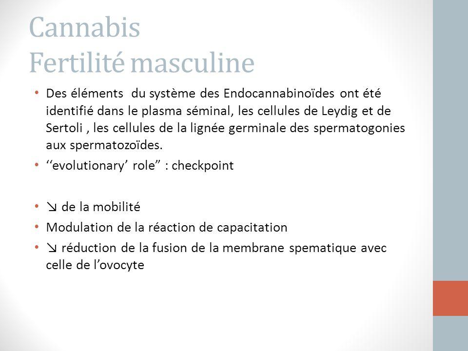 Cannabis Fertilité masculine Des éléments du système des Endocannabinoïdes ont été identifié dans le plasma séminal, les cellules de Leydig et de Sert