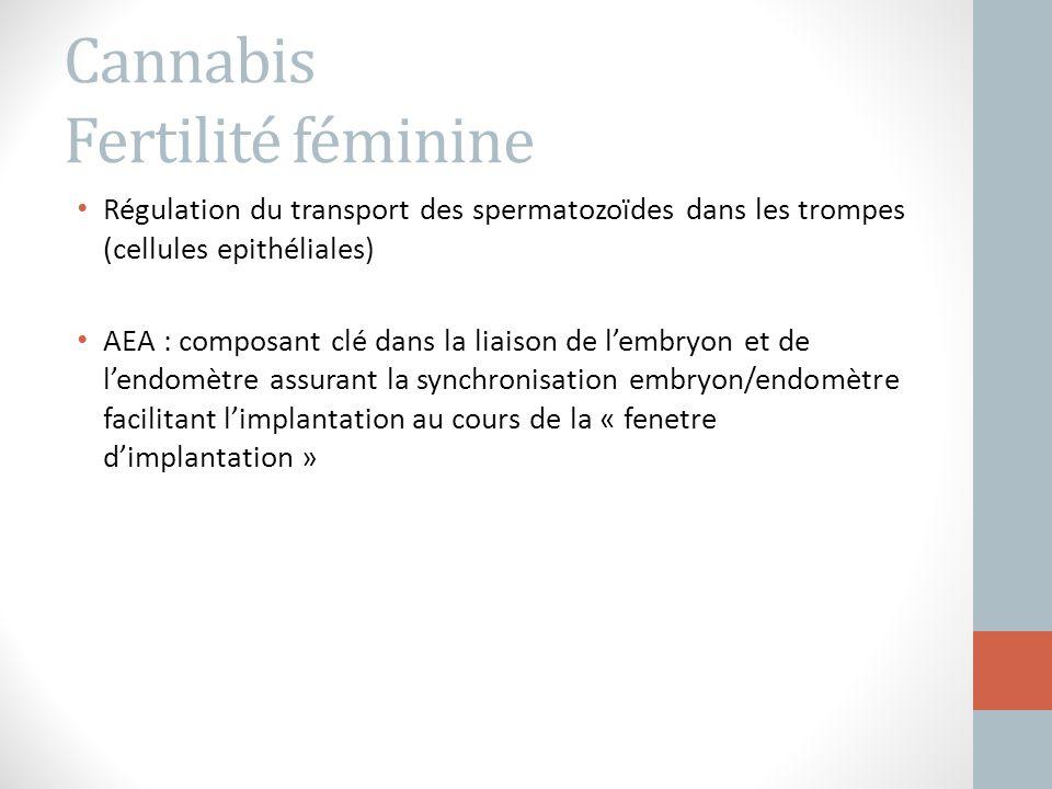 Cannabis Fertilité féminine Régulation du transport des spermatozoïdes dans les trompes (cellules epithéliales) AEA : composant clé dans la liaison de