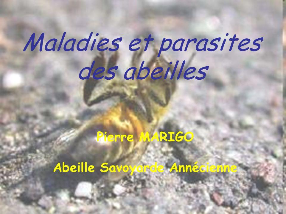 Les ennemis des abeilles Comme tous les êtres vivants, les abeilles sont menacées par: –Des maladies virales et bactériennes –Des parasites –Des prédateurs