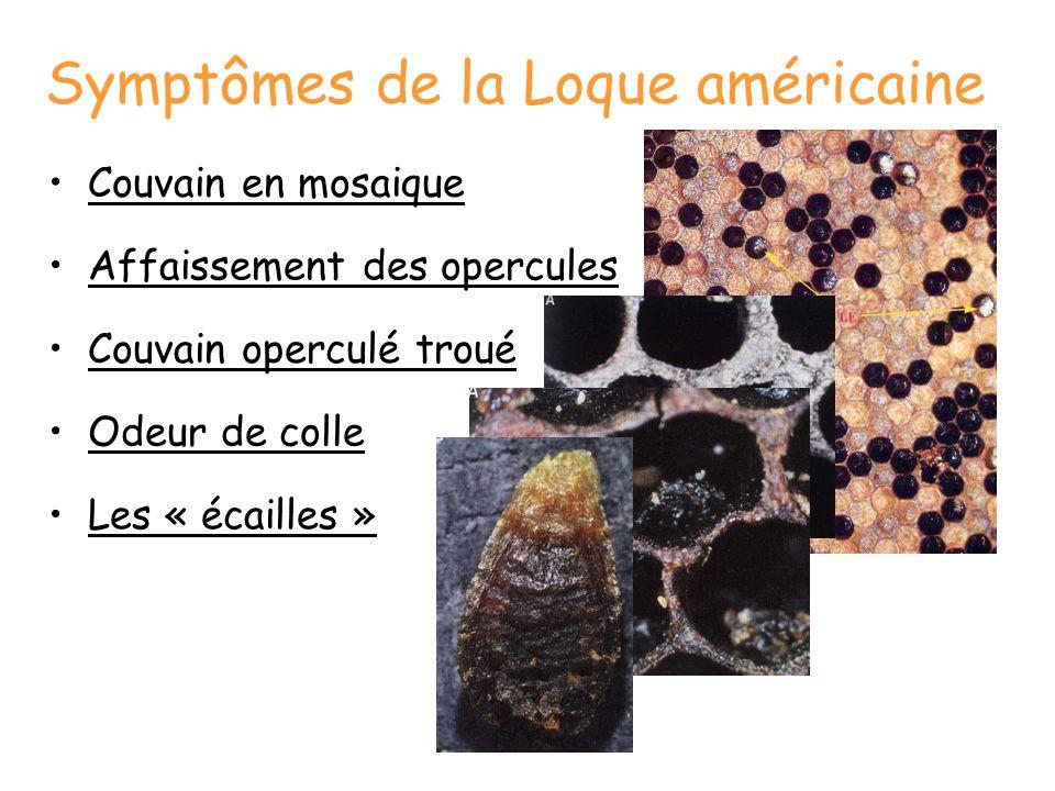 Diagnostic: le test de l'alumette La larve filante