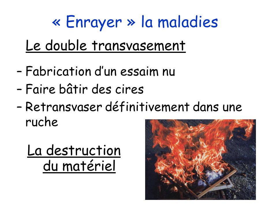 Les Loques européennes Maladie à déclaration obligatoire Agent: Melissococus pluton et autres Cible: Couvain ouvert Conséquences: affaiblissement