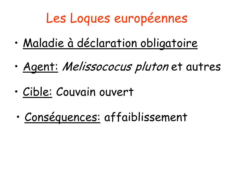 Symptômes de la Loque europénne Couvain en mosaïque Larves blanchâtres molles