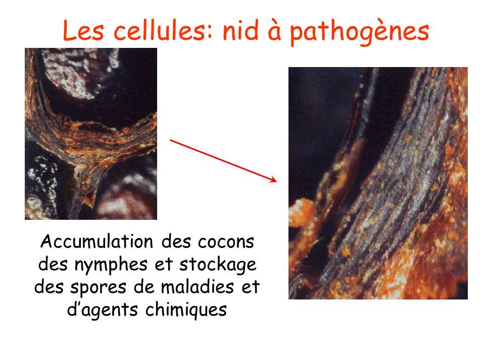 Phases de contamination possibles Hormis les œufs, toutes les autres phases du développement peuvent être atteintes