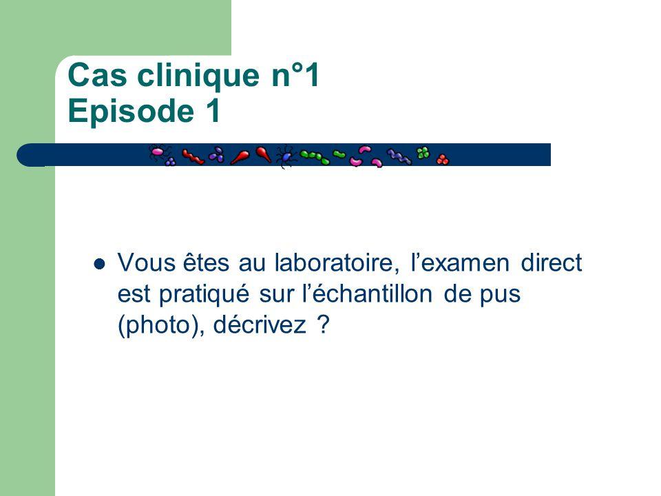 Cas clinique n°1 Episode 1 Vous êtes au laboratoire, l'examen direct est pratiqué sur l'échantillon de pus (photo), décrivez ?