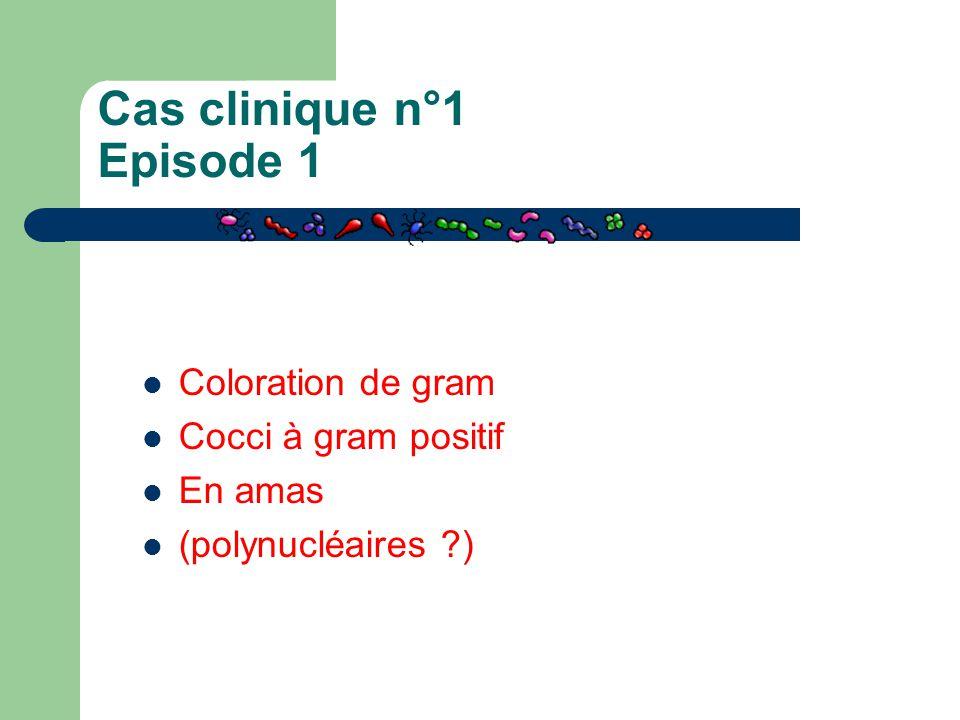 Coloration de gram Cocci à gram positif En amas (polynucléaires ?)