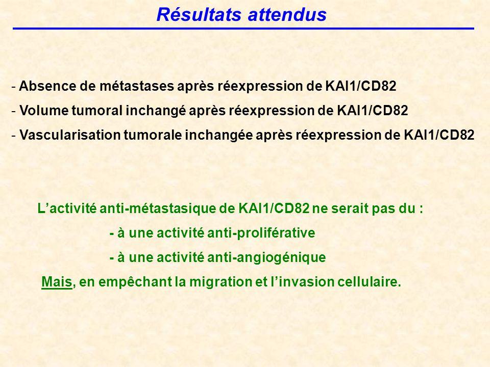 Résultats attendus - Absence de métastases après réexpression de KAI1/CD82 - Volume tumoral inchangé après réexpression de KAI1/CD82 - Vascularisation tumorale inchangée après réexpression de KAI1/CD82 L'activité anti-métastasique de KAI1/CD82 ne serait pas du : - à une activité anti-proliférative - à une activité anti-angiogénique Mais, en empêchant la migration et l'invasion cellulaire.