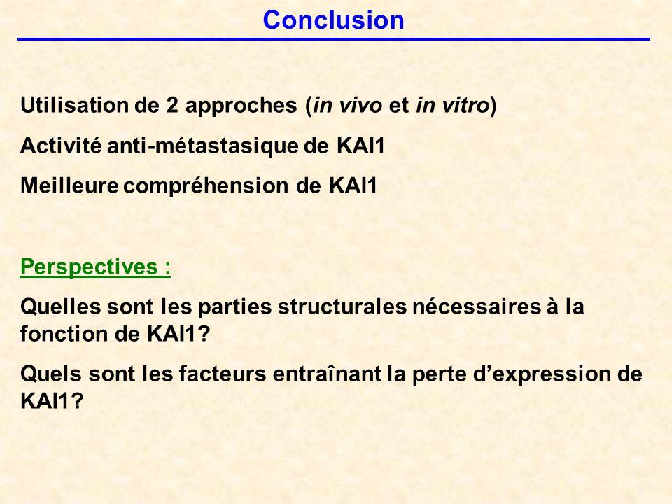 Conclusion Utilisation de 2 approches (in vivo et in vitro) Activité anti-métastasique de KAI1 Meilleure compréhension de KAI1 Perspectives : Quelles sont les parties structurales nécessaires à la fonction de KAI1.