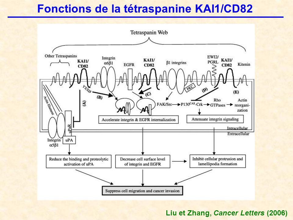 Fonctions de la tétraspanine KAI1/CD82 Liu et Zhang, Cancer Letters (2006)