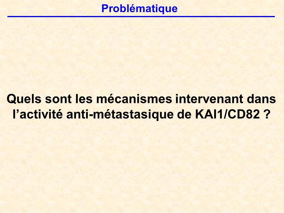 Problématique Quels sont les mécanismes intervenant dans l'activité anti-métastasique de KAI1/CD82 ?