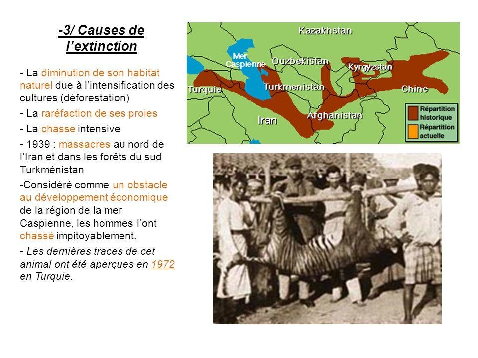 -3/ Causes de l'extinction - La diminution de son habitat naturel due à l'intensification des cultures (déforestation) - La raréfaction de ses proies - La chasse intensive - 1939 : massacres au nord de l'Iran et dans les forêts du sud Turkménistan - Considéré comme un obstacle au développement économique de la région de la mer Caspienne, les hommes l'ont chassé impitoyablement.