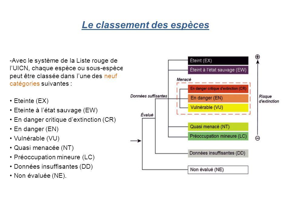 Le classement des espèces - Avec le système de la Liste rouge de l'UICN, chaque espèce ou sous-espèce peut être classée dans l'une des neuf catégories suivantes : Eteinte (EX) Eteinte à l'état sauvage (EW) En danger critique d'extinction (CR) En danger (EN) Vulnérable (VU) Quasi menacée (NT) Préoccupation mineure (LC) Données insuffisantes (DD) Non évaluée (NE).