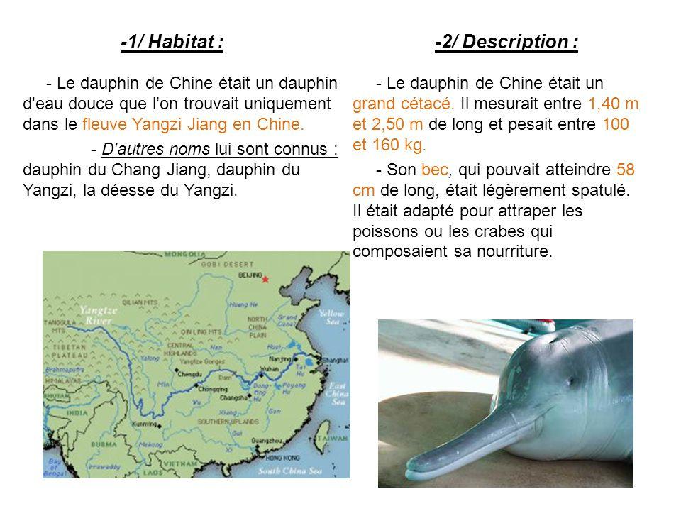 -1/ Habitat : - Le dauphin de Chine était un dauphin d eau douce que l'on trouvait uniquement dans le fleuve Yangzi Jiang en Chine.