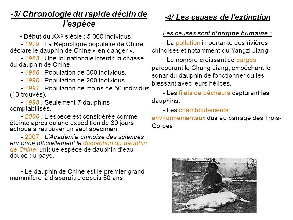 -3/ Chronologie du rapide déclin de l'espèce - Début du XX e siècle : 5 000 individus. - 1979 : La République populaire de Chine déclare le dauphin de