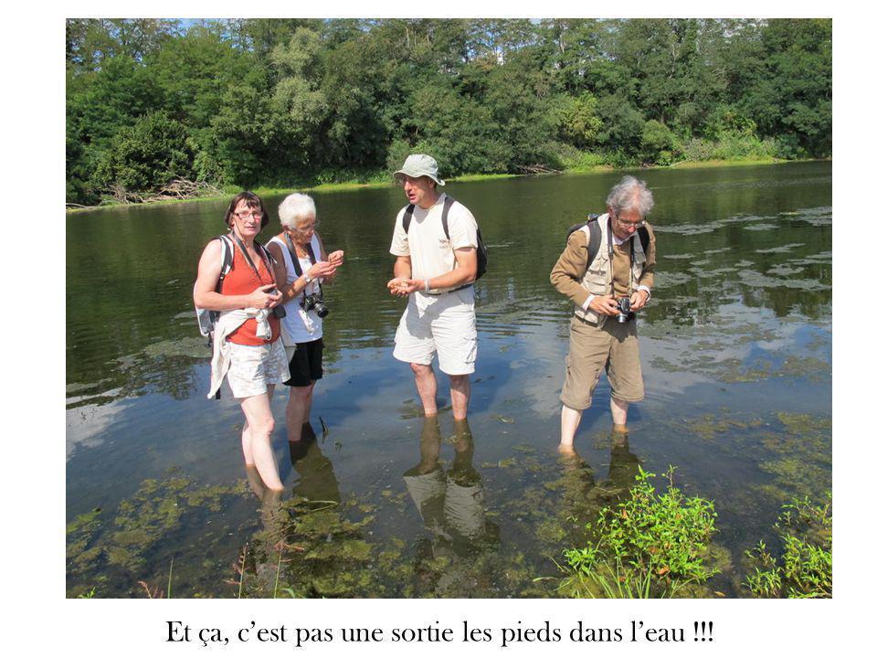 Et ça, c'est pas une sortie les pieds dans l'eau !!!