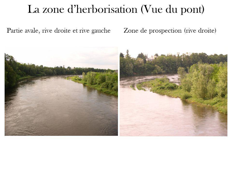 La zone d'herborisation (Vue du pont) Partie avale, rive droite et rive gauche Zone de prospection (rive droite)