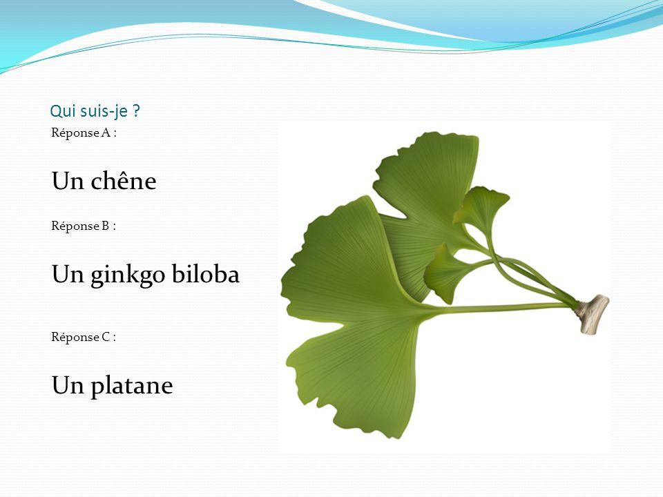 Qui suis-je ? Réponse A : Un chêne Réponse B : Un ginkgo biloba Réponse C : Un platane