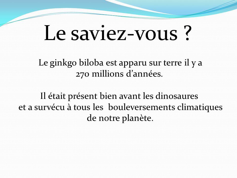 Le saviez-vous ? Le ginkgo biloba est apparu sur terre il y a 270 millions d'années. Il était présent bien avant les dinosaures et a survécu à tous le
