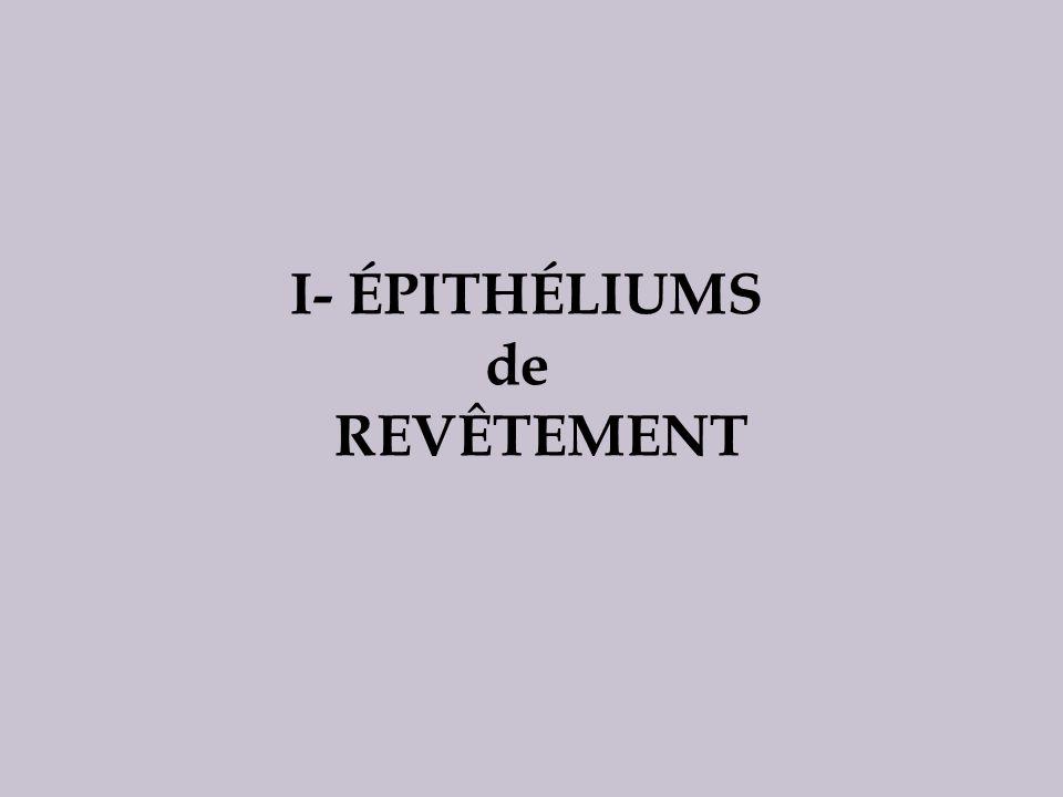II- ÉPITHÉLIUMS GLANDULAIRES